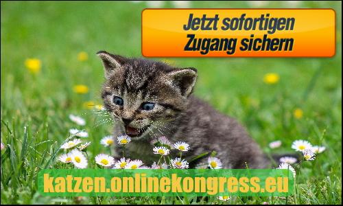 katzen.onlinekongress.eu