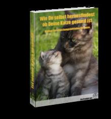 Erste-Hilfe-Katzen-1-Gratis